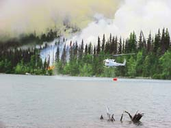 Forest fires aid in the spread of mercury in soil