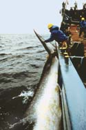 Japan invites members of whaling commission for meeting