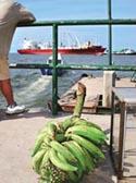 EU blocks WTO probe into banana import tariffs