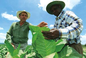 No state support to Zimbabwe's A2 farmers