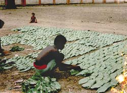 Orissa kendu leaf workers end strike