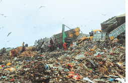 SC agrees to subsidise five waste-to-energy plants
