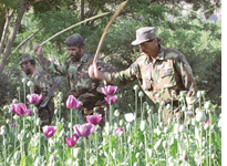 Afghanistan under pressure to enact anti-narcotics plan
