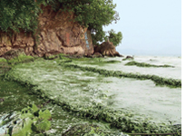 Alga bloom: China sacks officials