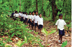A headmaster and his students save a forest