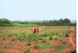 Orissa tribals struggle to regain cashew rights