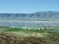 Protest against plant near Tanzania's Lake Natron