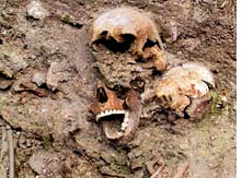 Remains of Venice plague