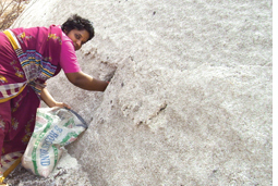 Andhra salt-makers want offici (Credit: APARNA PALLAVI)