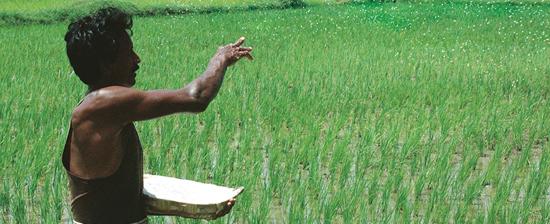 Centre debates remodelling fertiliser subsidy