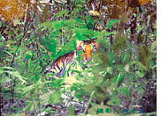 Controvesy over South China tiger's photograph