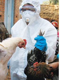 Bengal bird flu outbreak - authorities unprepared