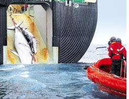 Whaling indiscriminately