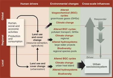 Urban socioecosystem as a driv