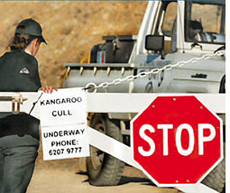 Protest over culling of kangaroos in Australia