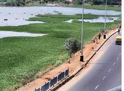 Bangalore lakes leased out