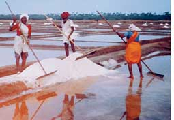 Saltmakers: Happy to be called (Credit: APARNA PALLAVI)