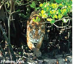 Sunderbans a land in limbo