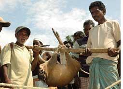 Bull to bull's eye