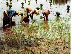 Slulphate excess can harm soil