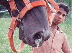 Horse flu spreads in India