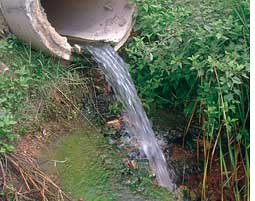 Untreated wastewater from  Hir (Credit: Saroj Mishra)