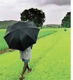 Rains are skipping India more often (Credit: PREETI SINGH)