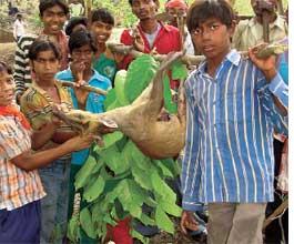 Tribals celebrate Sendra