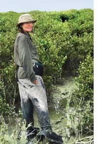 Scientist Catherine Lovelock swamped by sewage in a mangrove forest (Credit: UNIVERSITY OF QUEENSLAND)