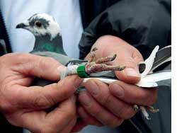 Bird beats broadband