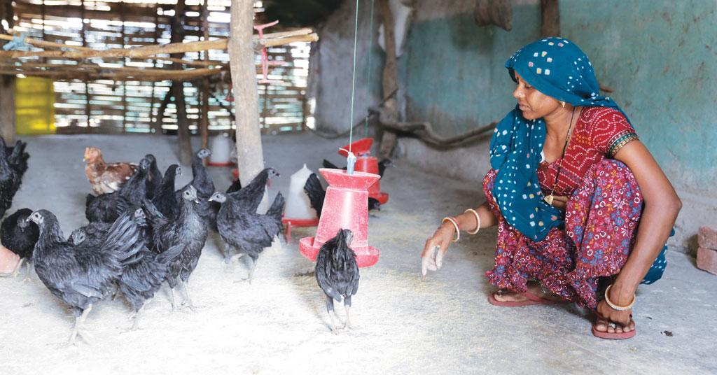 Rearing and selling