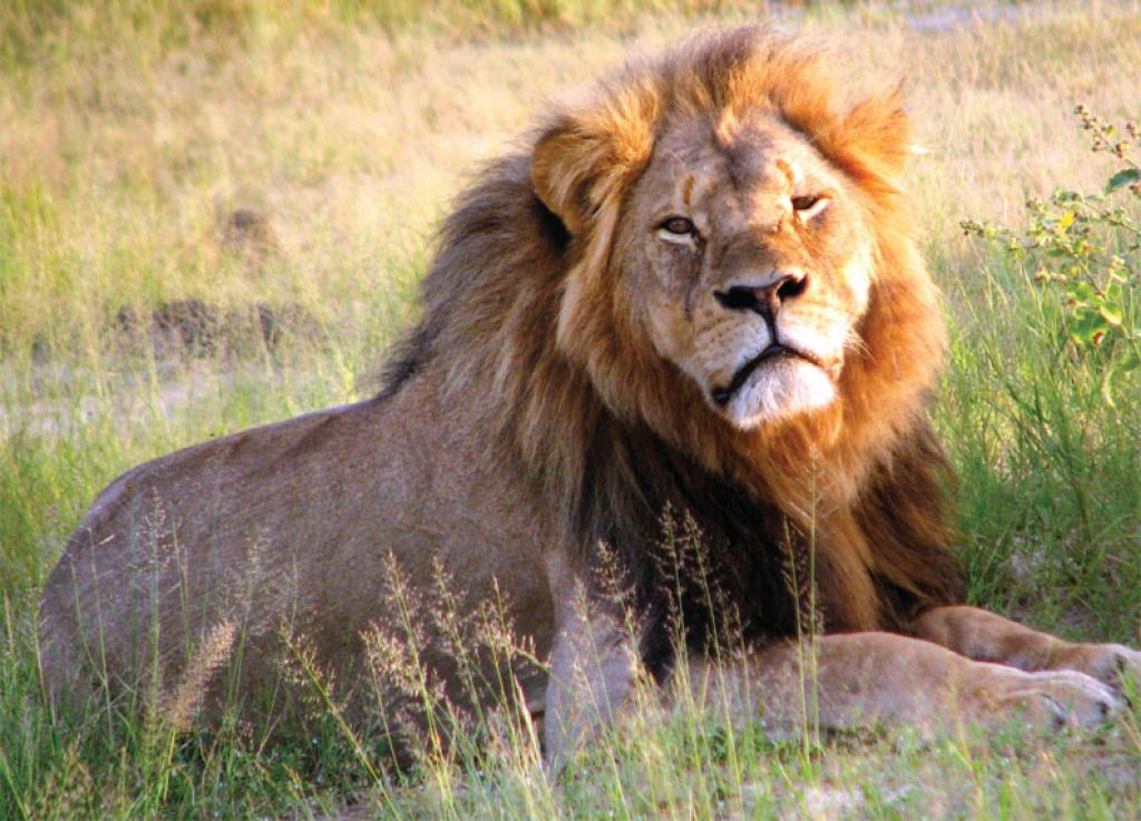 Recreational hunting—should India allow trade of wildlife trophies?