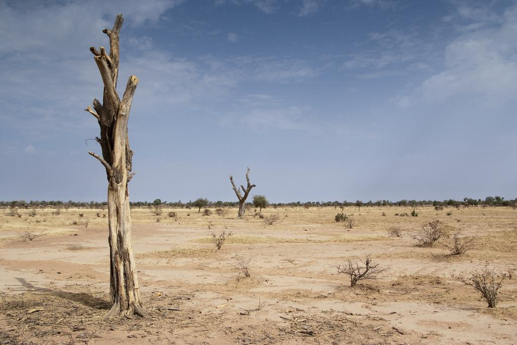 Gradual desertification in Africa is having a far-reaching impact on human health, food security and economic activity Credit: TREEAID / Flicker