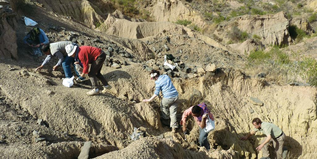 The Indo-French team collects pieces of the skeleton of a giant terrestrial turtle in a gully in the Siwalik Hills  (Photo Courtesy: Indo-French Research Team)