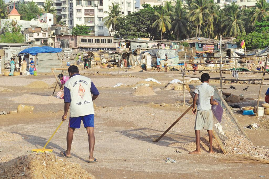 Khar Danda will be one of the worst affected fishing villages. Reclamation and mangrove removal will also destroy fish breeding sites (COURTESY: BOMBAYVA)