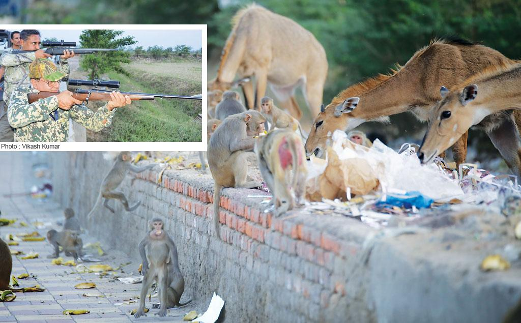 The Union environment ministry has declared nilgais and monkeys as vermins for a year. The Bihar government hired shooters (extreme left) from Hyderabad who killed 250 nilgais in just three days in June (Photo: Vikas Choudhary)