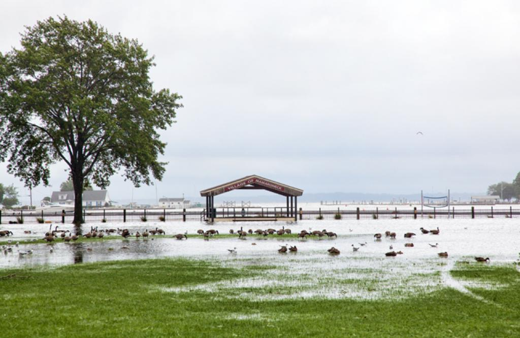 While the loss of marshland and trees exposed the residents to hurricanes, frequent flooding has made farming impossible Credit: June Marie / Flicker