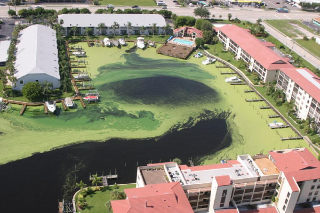 Representative image of algae bloom in Florida (Photo courtesy: John Moran, via Wikimedia Commons)
