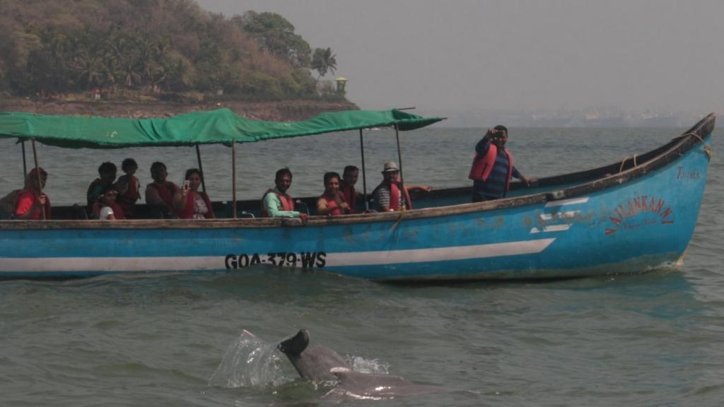 Humpback dolphin is the focal species for tourism in Goa (Credit: Bhaskar Goswami/CSE)