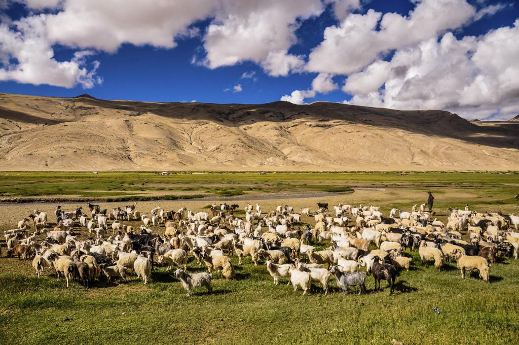 Small farms, often keeping only a few animals, produce up to 80 per cent of the food consumed in Asia and sub-Saharan Africa, says the report (Photo credit: iStock)