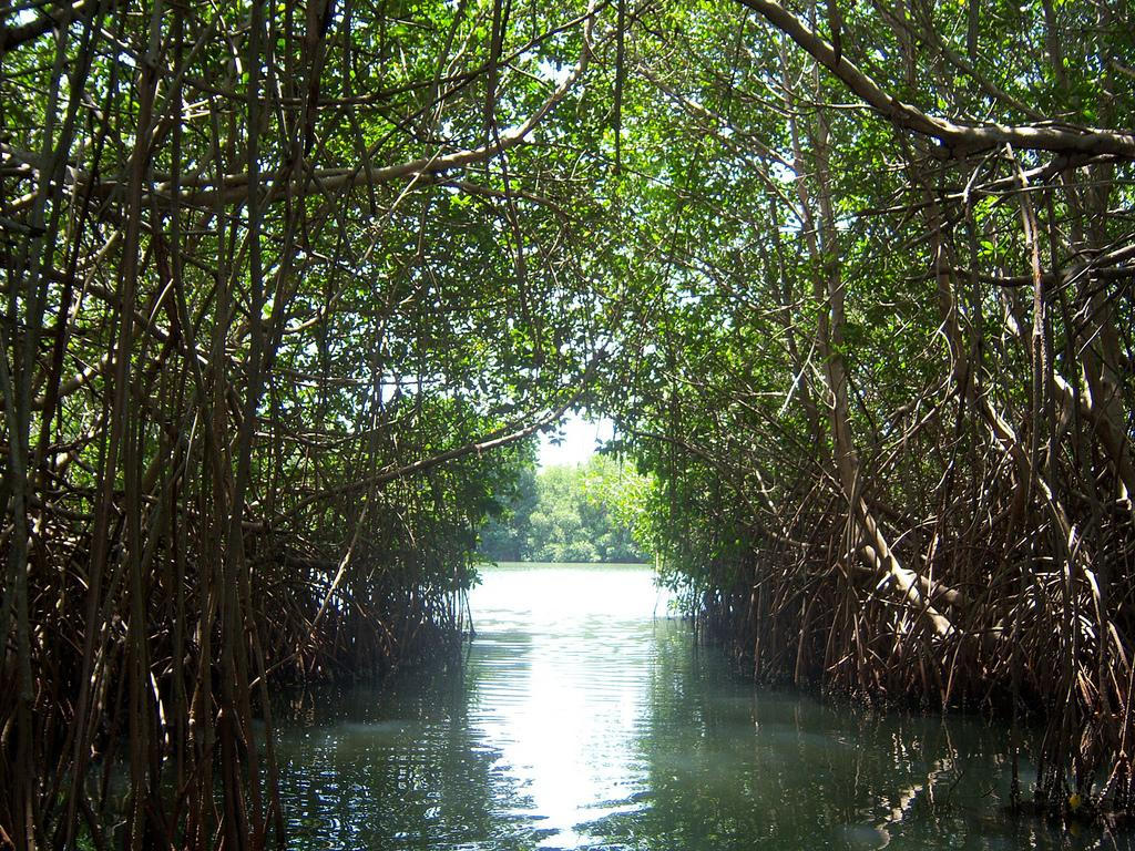 Destruction of coral reefs is often looked upon as a reason of mangrove die-offs. Credit: SEMARNAT/ Flicker