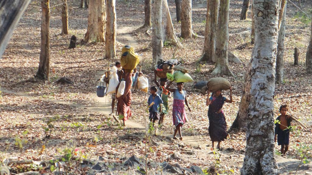 Beehives have disappeared from the forest adjoining Jabarra village in Chhattisgarh. Mahua flower collection is also dismally low (Photo: Purushottam Singh Thakur)
