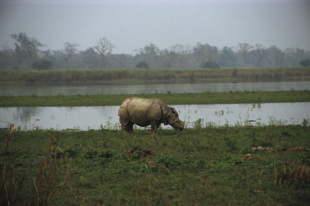 Forest teams have managed to rescue at least nine rhinos. Credit: gnozef/ Flicker