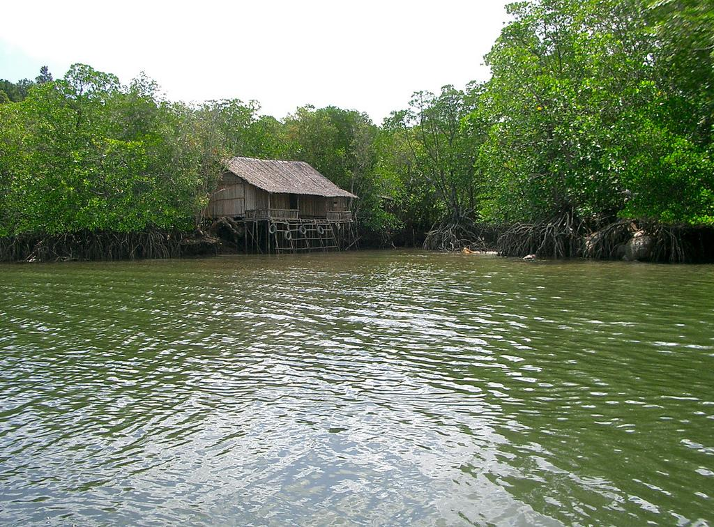 Indonesia is home to 22.6 per cent of all mangroves in the world Credit: Kento Ikeda / Flicker