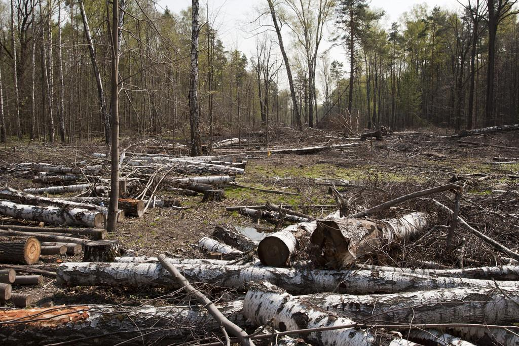 Maximum cases across the country were reported under the Forest Act of 1927. Credit:  Daniel Beilinson /Flicker