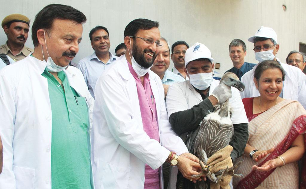 Prakash Javadekar releases the Himalayan Griffon vultures at the Jatayu Conservation Centre in Pinjore, Haryana, on June 5 this year (Source: PIB)