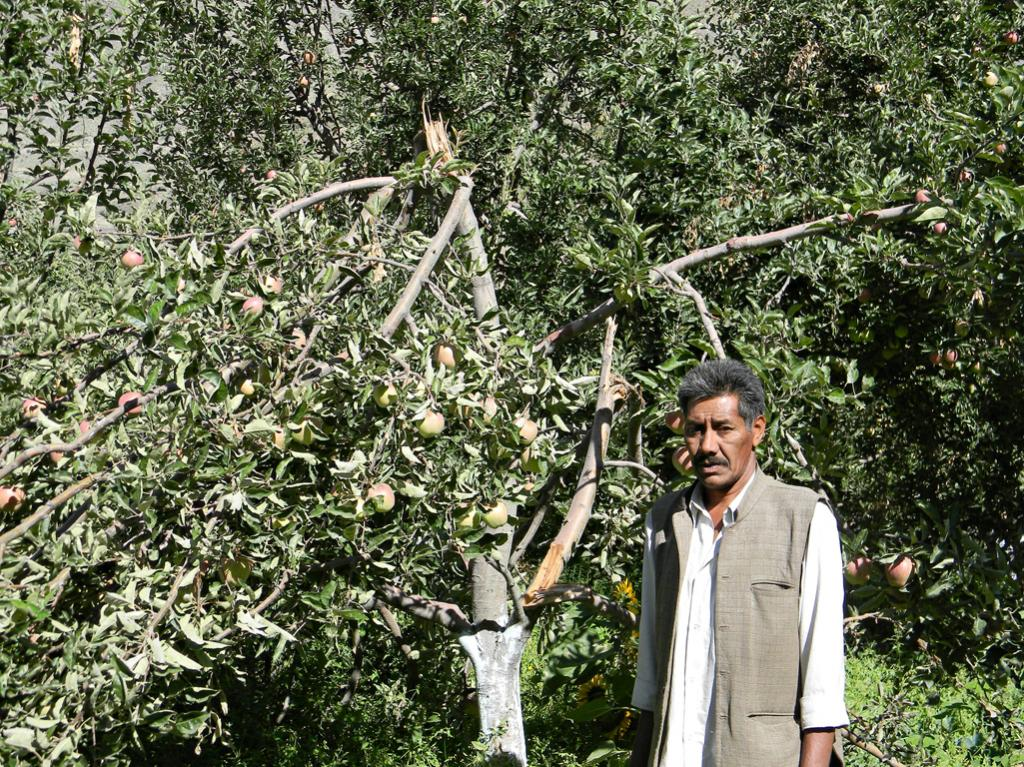 Apple is the mainstay of the Kinnaur economy.Untimely & intense snowfall in the peak of summer spelt disaster for the apple crop this year.