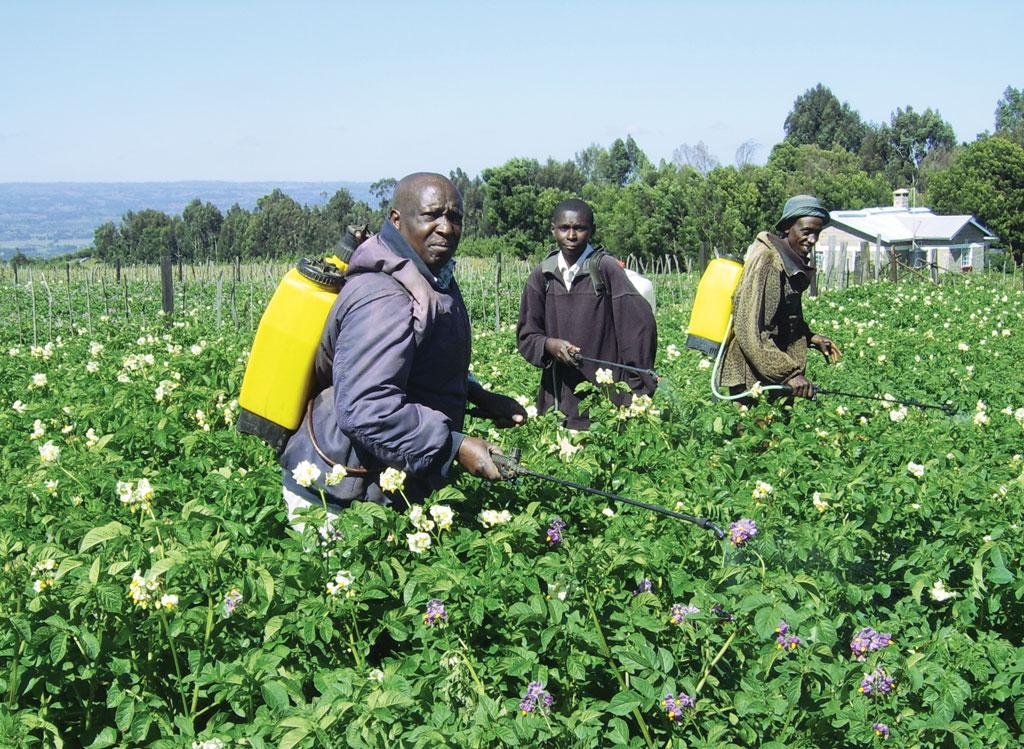 Farmers near the lake spray water on Irish potato. Nyandarua county is known as the bread basket of Kenya for its high production of potato, cabbage, maize and bean