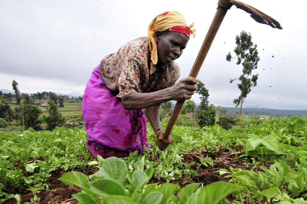 By 2020, one full-time African farmer will be expected to feed two urban dwellers. Credit: CIAT/ Flicker