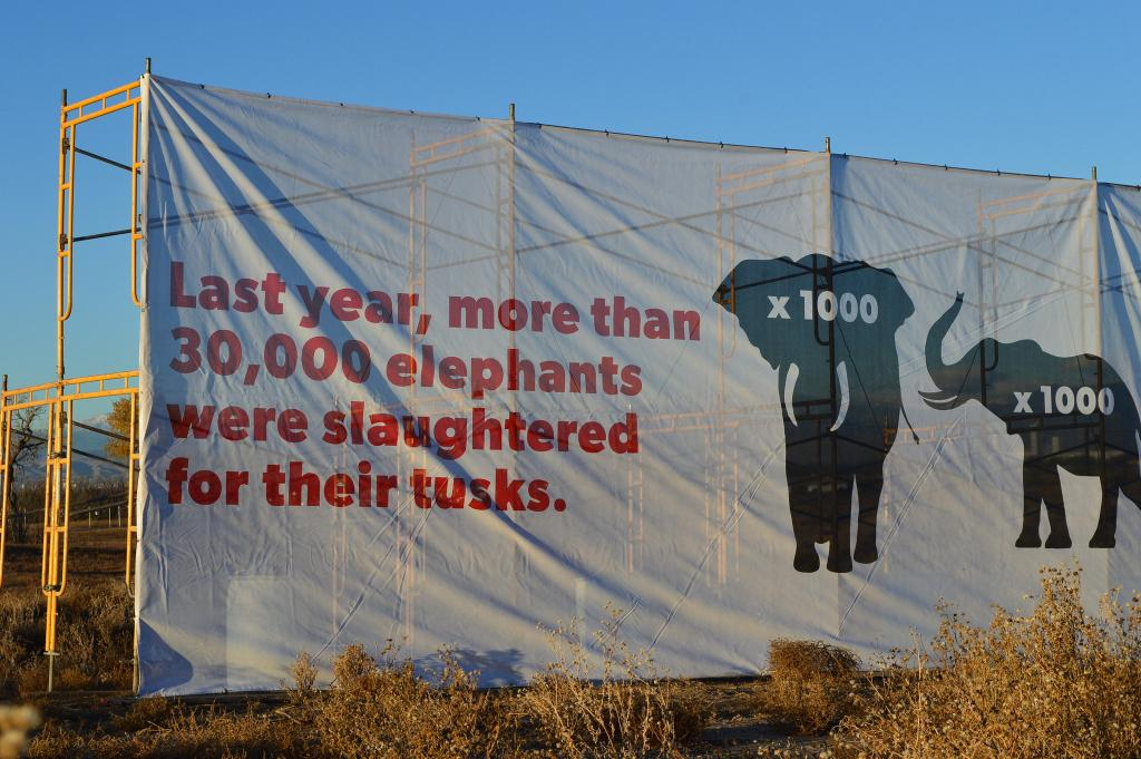 While some CITES member countries demand a total ban, others call for regulating and retaining the ivory trade. Credit: USFWS / Flicker
